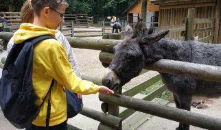 Z wizytą w zoo